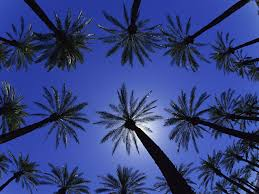 awesome palm tree hd wallpaper free download