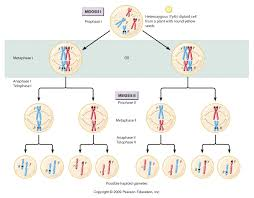 introduction to genetics the work of gregor mendel