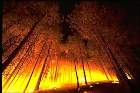 record loss of global tree cover in 2016 driven by forest fires