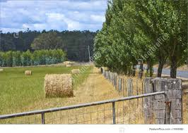 tree and fence line image