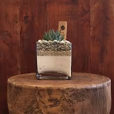 Sand Vase Succulent In A Square Vase With White Sand U0026 Grey Rocks In Los