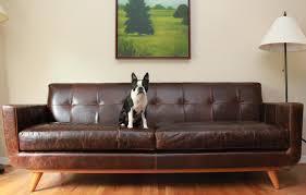 Nixon Leather Sofa Boston Terrier On The Nixon Leather Sofa By Thrive Furniture