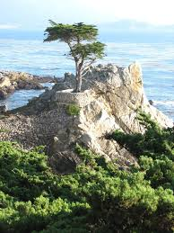 California nature activities images Best 25 17 mile drive ideas monterey beach jpg