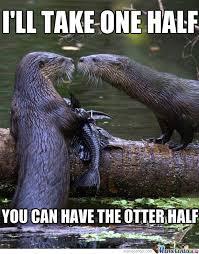 Sea Otter Meme - meme center largest creative humor community otters