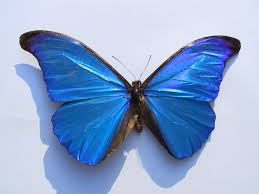 butterfly large free images at clker vector clip