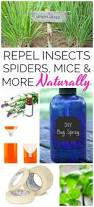 best 25 natural ant repellant ideas on pinterest natural bug
