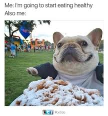 Chubby Meme - chubby and happy french bulldog animals and pets pinterest