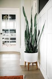 indoor plants that don t need sunlight 10 houseplants that don t need sunlight sansevieria trifasciata
