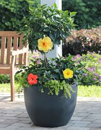 62 best fab and fun container garden ideas images on pinterest
