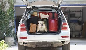 porta cani per auto trasportino da auto migliori prodotti per cani