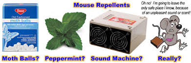 Are Mice Blind How To Get Rid Of Mice