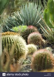 cacti garden bed plants ornamental plants cactigarten cacti plants