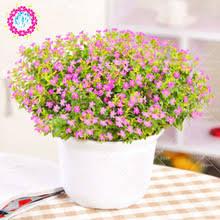 online get cheap beautiful indoor plants aliexpress com alibaba