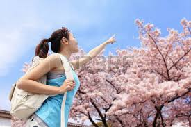 travel look map and smile with cherry blossoms