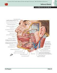 Mcgraw Hill Anatomy And Physiology Saladin 6th Edition F Netter Atlas Of Human Anatomy Cool 10 Pictures And Images As