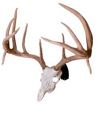 Fake Deer Head Wall Mount Huge Replica Whitetail Deer Skull W Antlers 23 Wide