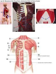 biol 2401 lab practical 3 pdf