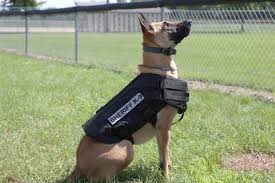 belgian malinois police 2014 busy year for k 9 team guthrie center times u0026 guthrie