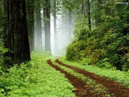 Deep Forest Green Forests Deep Rainforest Forest Green Sub Tropical Peaceful Path