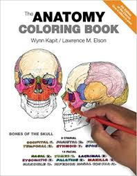 Photos Of Human Anatomy The Anatomy Coloring Book 9780321832016 Medicine U0026 Health