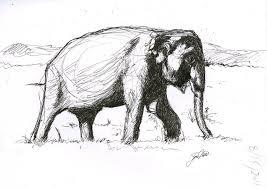 elephant sketch by futureaesthetic on deviantart