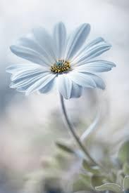 Soft Blue Color 87 Best Blue Images On Pinterest Color Blue Indigo Blue And