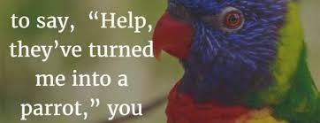 Parrot Meme - parrot meme my incredible website
