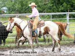 272 best american paint horses images on pinterest american