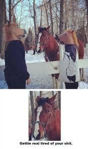 Gay Horse Meme - what does a gay horse eat hhaaaayyy meme by fma ebay memedroid