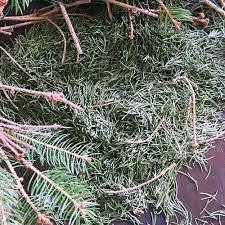diy pine mason jars dried pine u0026 mason jars life u0027s little sweets