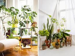 the best plants for indoor bonjour chiara
