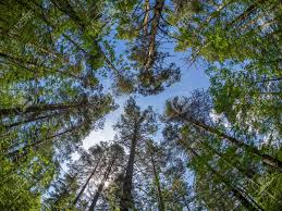 imagenes de bottom up trees from the bottom up stock photo picture and royalty free image