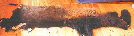 Bison Hide Rug Dr0605 Jpg