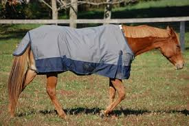 poll recap spring blanket cleaning thehorse com