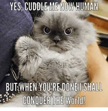 Grumpy Cat Yes Meme - yes cuddle me now human but when youre done shall conquer the