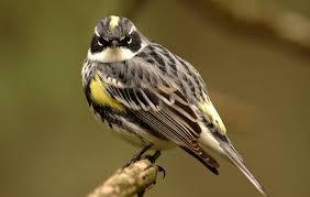 Vermont birds images Birds audubon vermont jpg