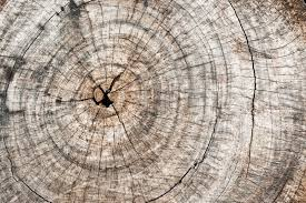 wooden cut texture with tree rings and cracks stock photo