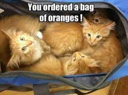Orange Dog Meme - orange dog meme 28 images 2927 best images about funny kitties