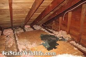 Squirrel In Basement by Attic Decontamination U0026 Restoration Services In Westchester Ny