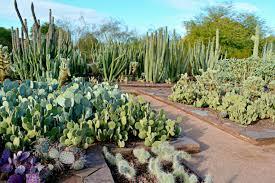 Desert Botanical Garden Restaurant Restaurants Near Desert Botanical Garden Dunneiv Org