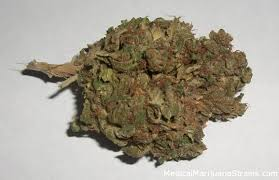 basement taste medical marijuana strains