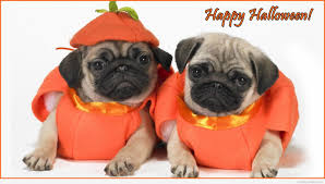 cool halloween images showing media u0026 posts for funny halloween dog wallpaper www