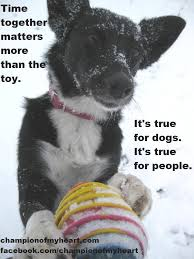 Christmas Dog Meme - meme 4 black friday chion of my heart