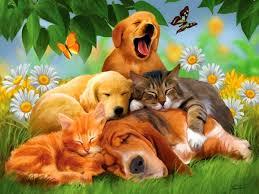 Desktop Hd Free Pictures Animals Free Animal Wallpaper