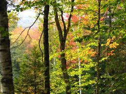 Vermont forest images Taking stock of vermont 39 s forest loss vermont public radio jpg