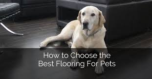 Best Flooring For Pets How To Choose The Best Flooring For Pets Home Remodeling