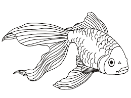 fishes drawing colour