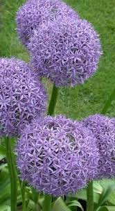 Summer Flower Garden Ideas - top 10 plants and bulbs for planting in spring spring bulbs