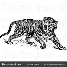 saber tooth tiger clipart u2013 101 clip art