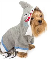 Halloween Costumes Small Dogs Halloween Costumes Small Dogs Chihuahua Mamas Dog Blog